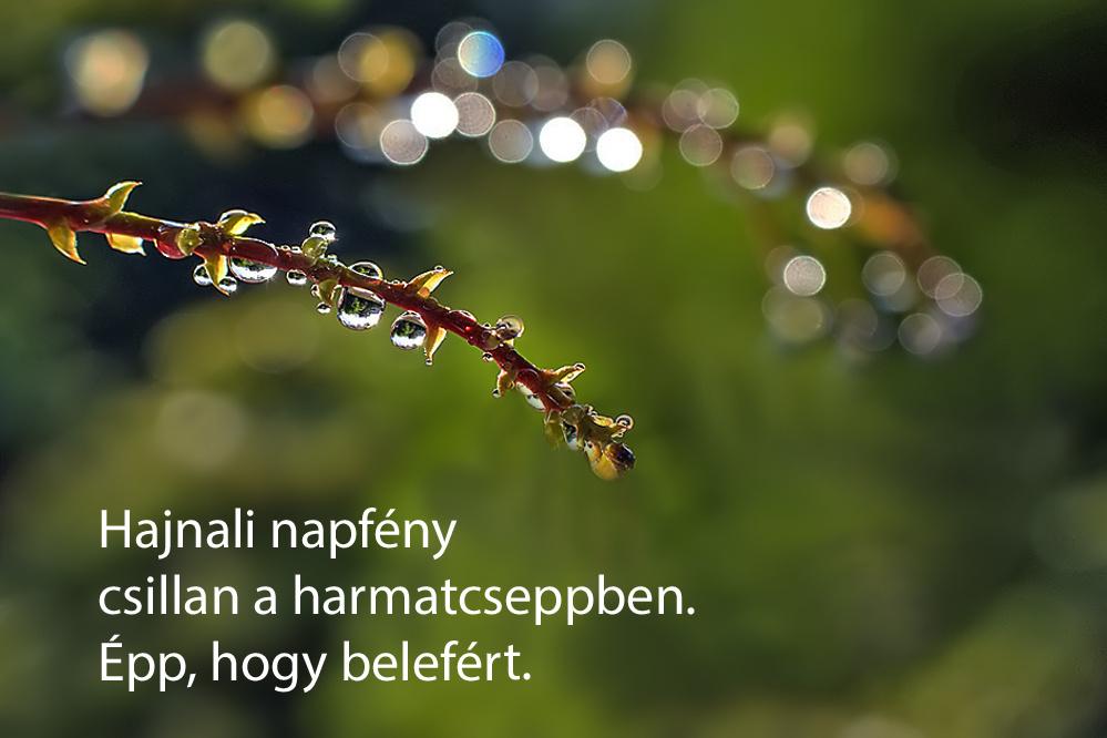 haikuk 53