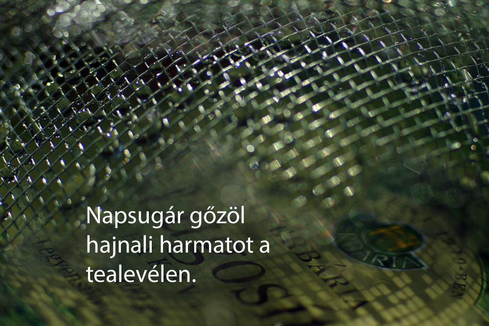 haikuk 65