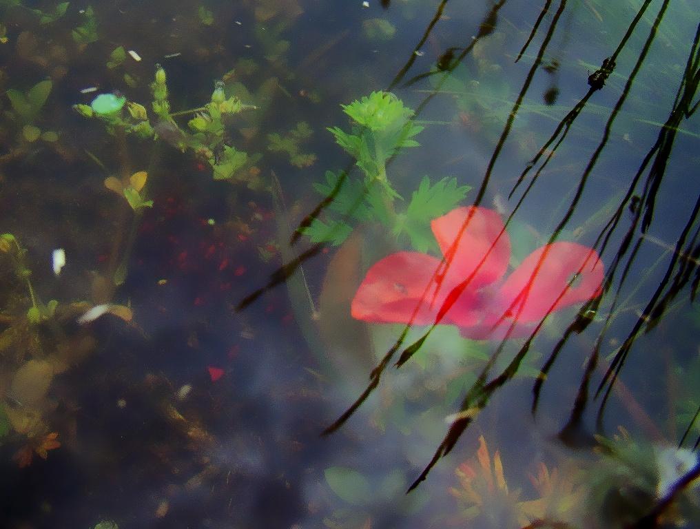 Természet, víz alatt
