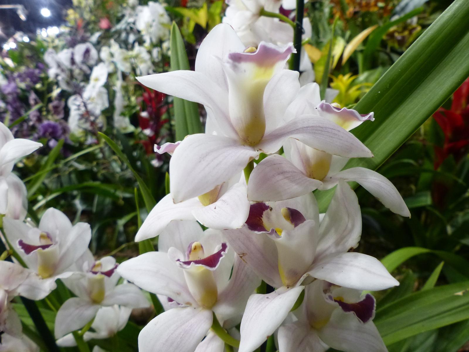 Budapest, Gardenexpo és Orchidea Ünnep 2018, SzG3