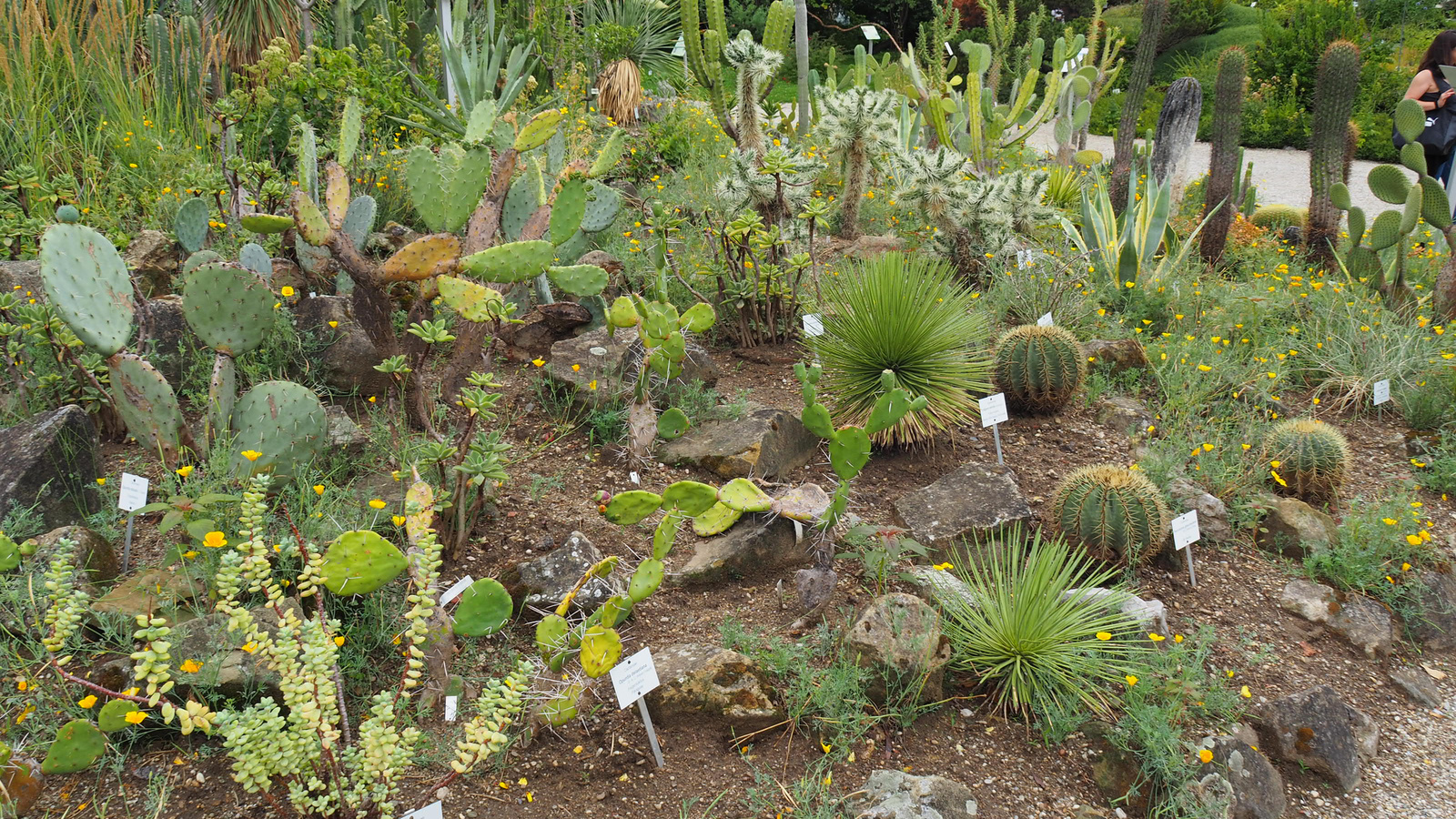 Bécsi Egyetem Botanikus kertje, SzG3