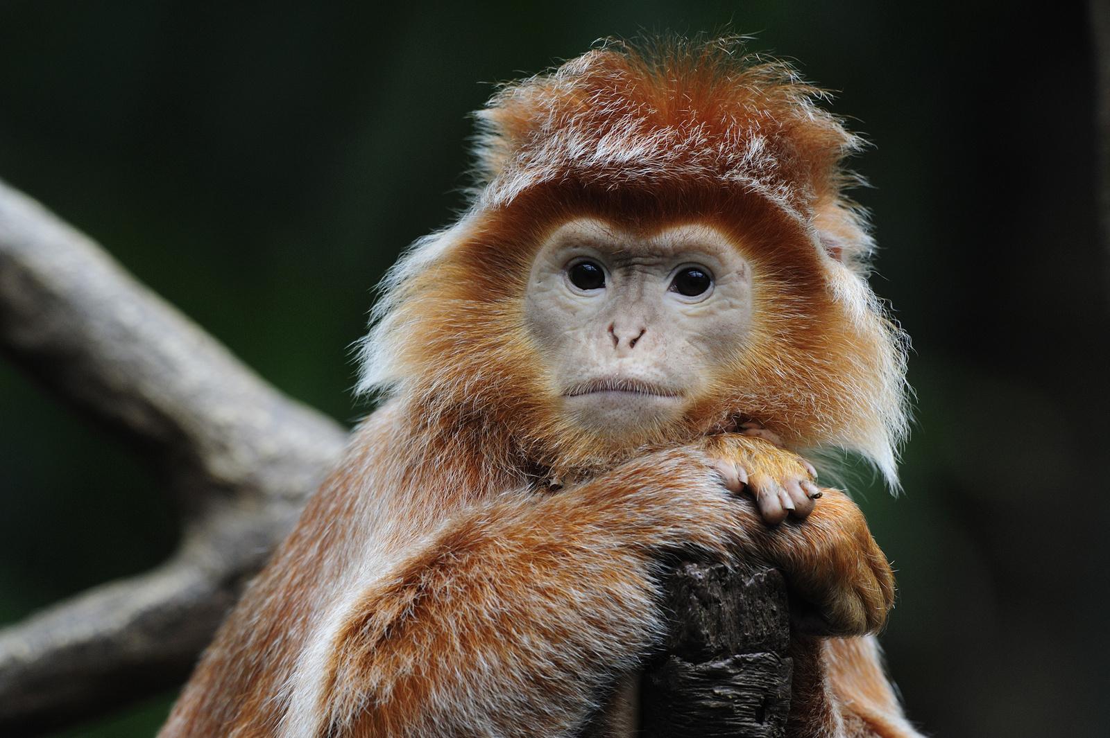 Corrado Monkey ISO1600