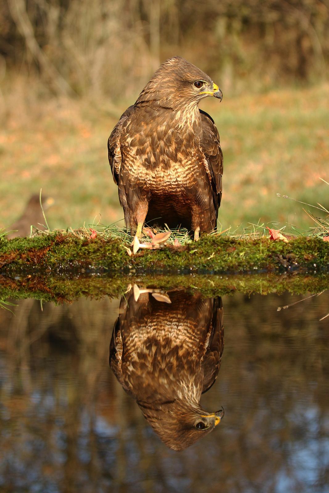 Álló tükör