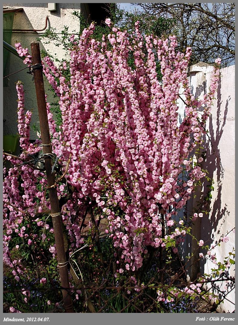 virágok 05