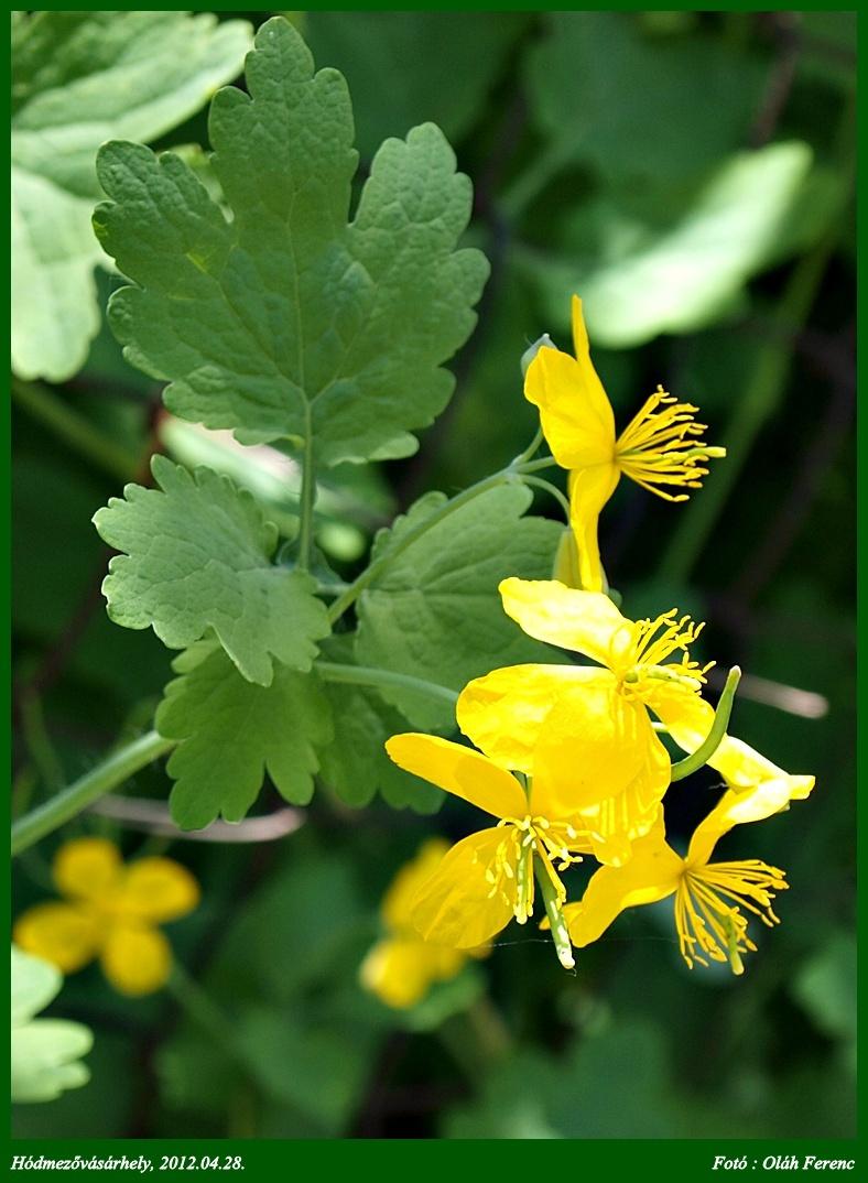 virágok 07