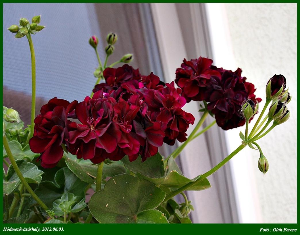 virágok 23