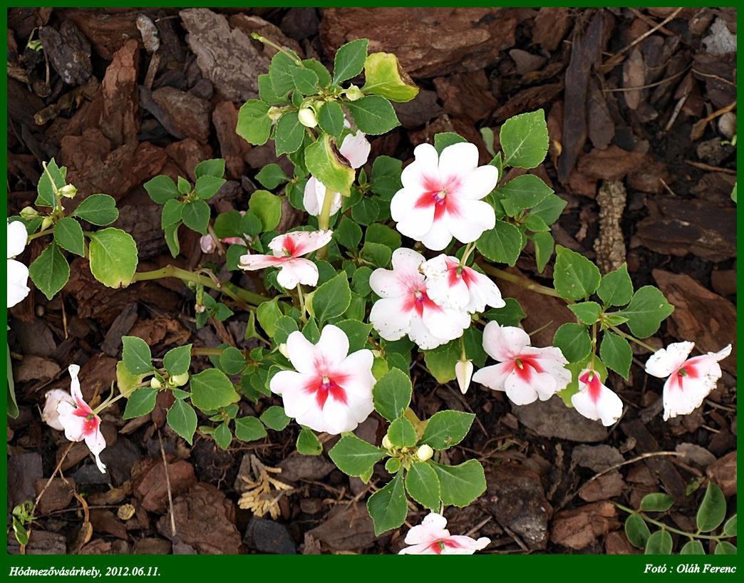 virágok 28