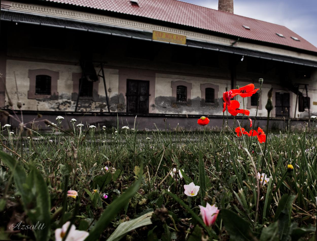 Virág a malom előtt