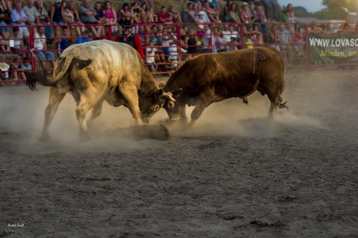 rodeo--2