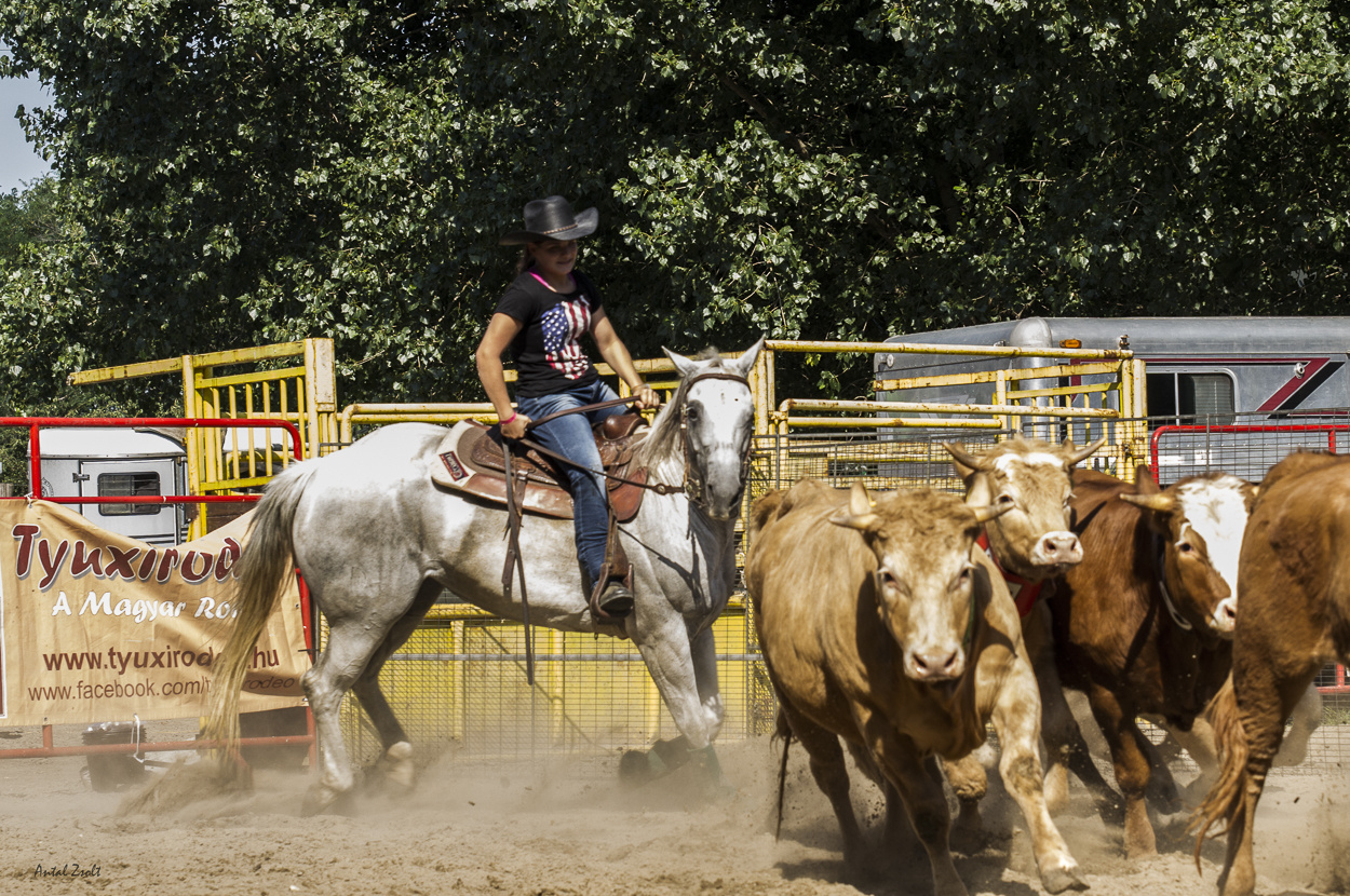 rodeo-7611