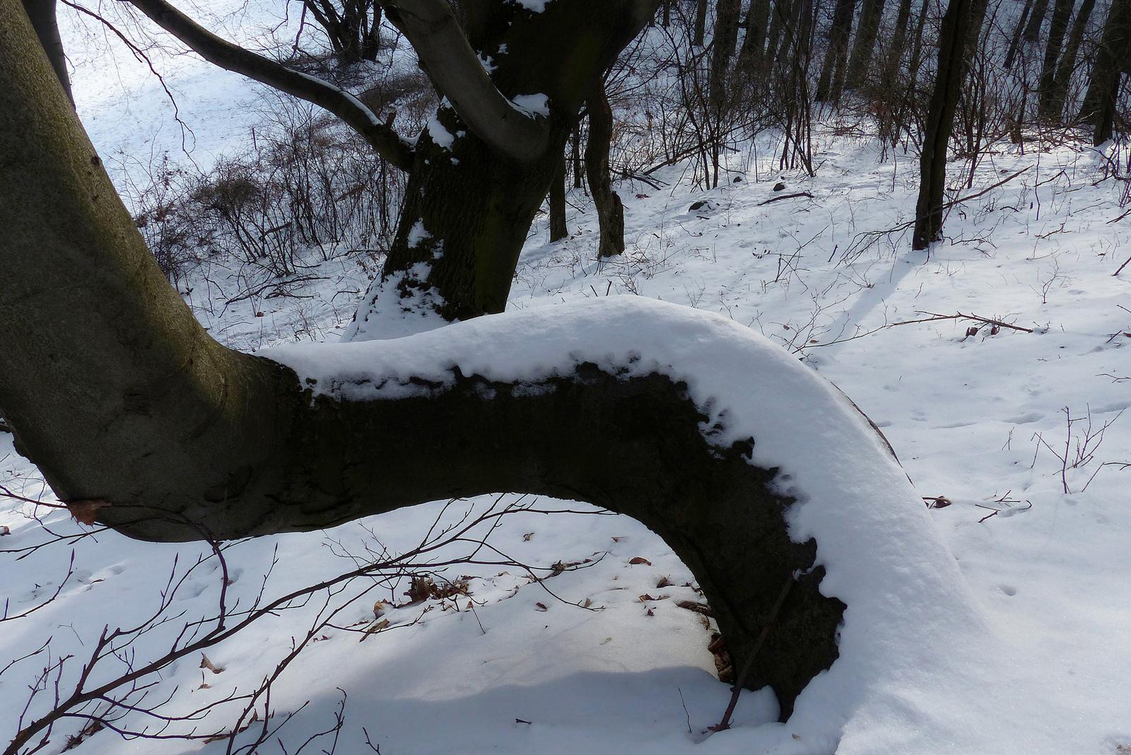 002 A békés erdő II.