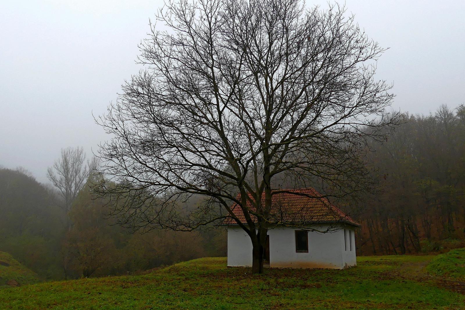 15 Ház diófával
