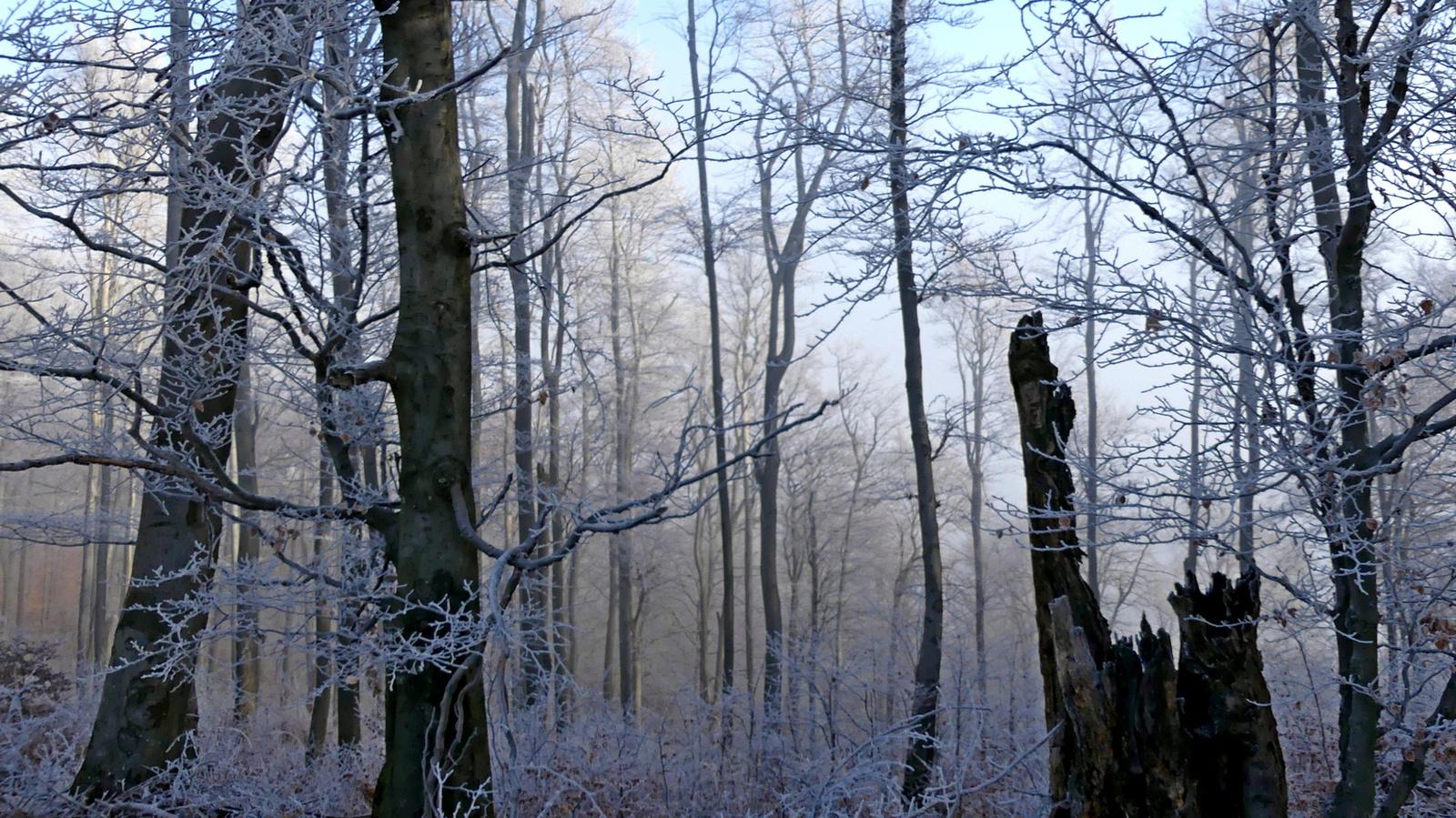 33 Zúzmarás erdő I.