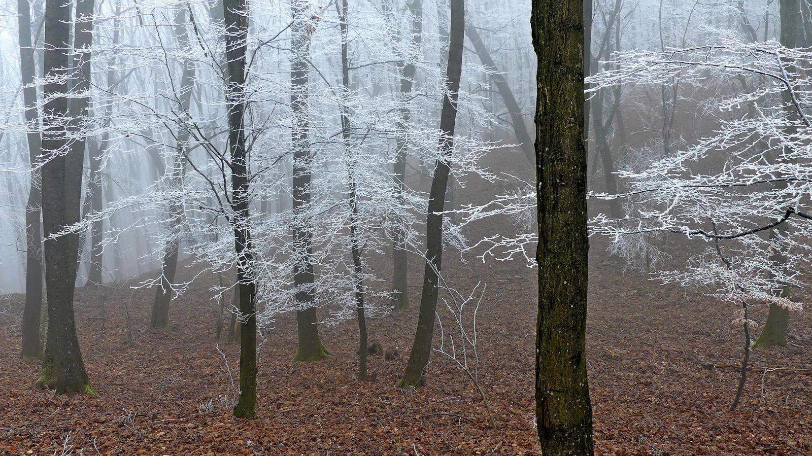14 Csipkés erdő
