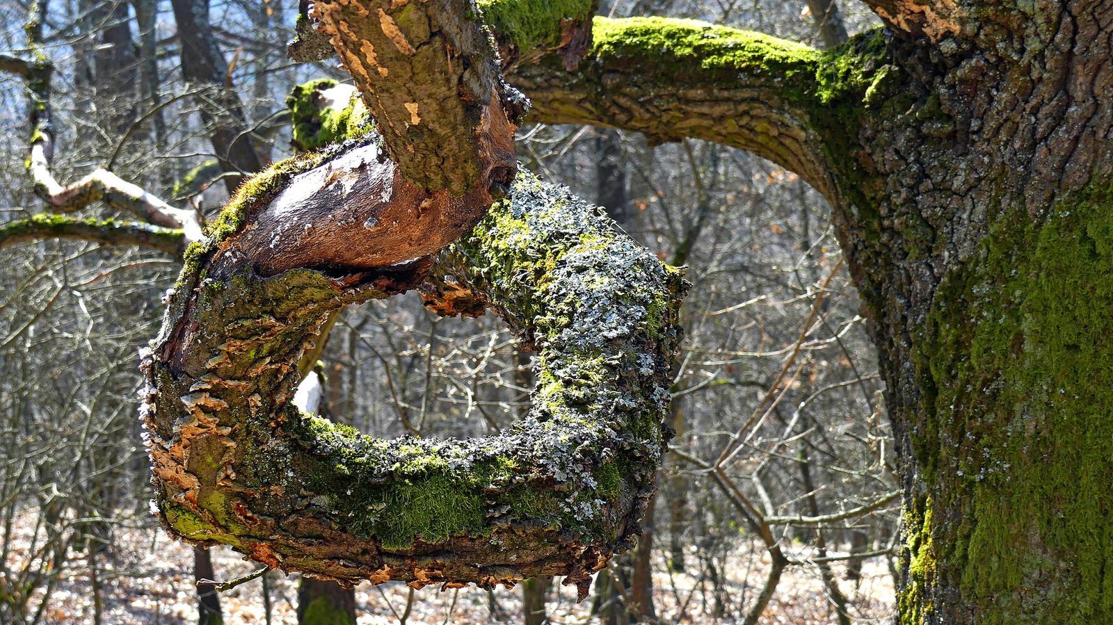 05 Hurok a fán