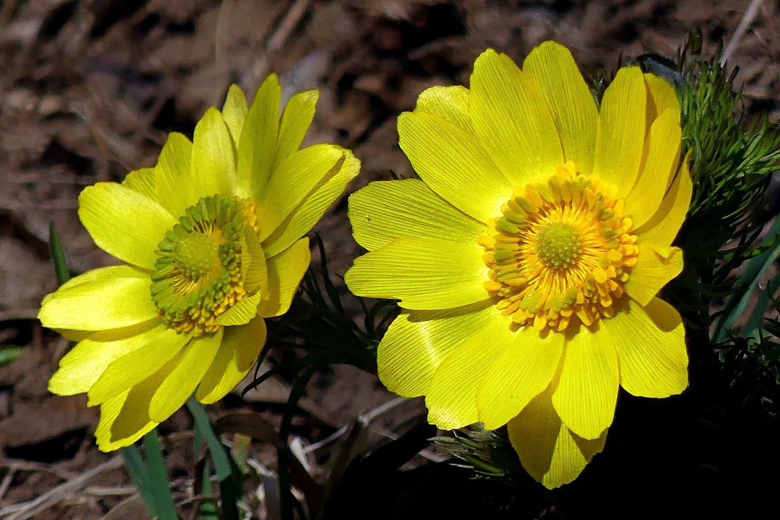 02 Tavaszi hérics páros