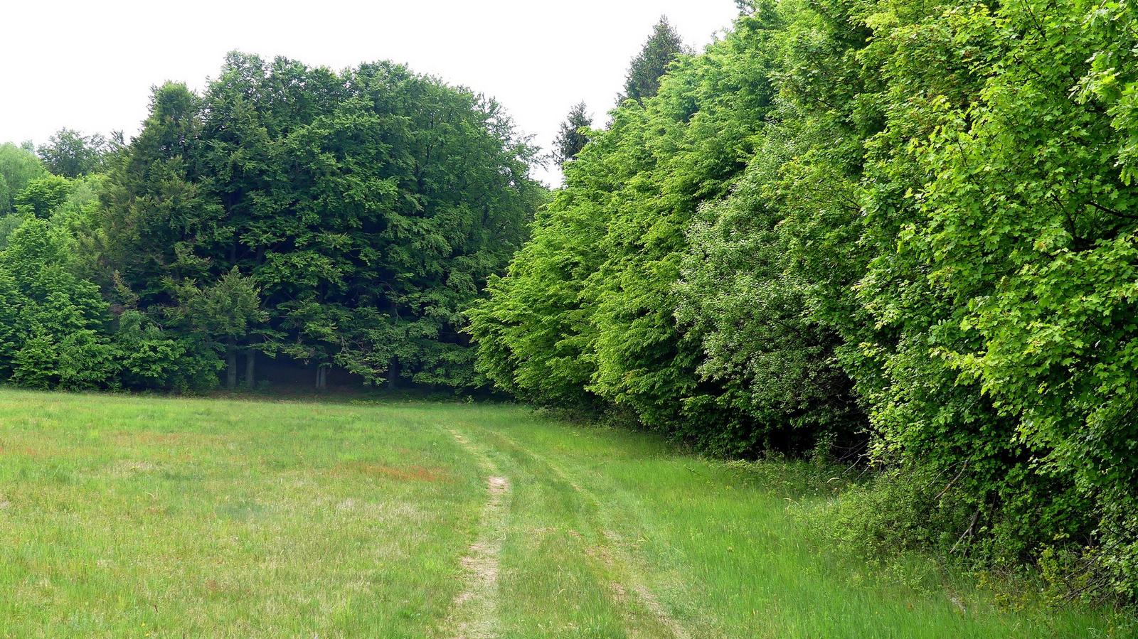 01 Erdőkarély