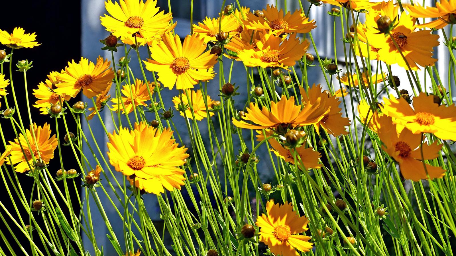 04 Lakótelepi virágok