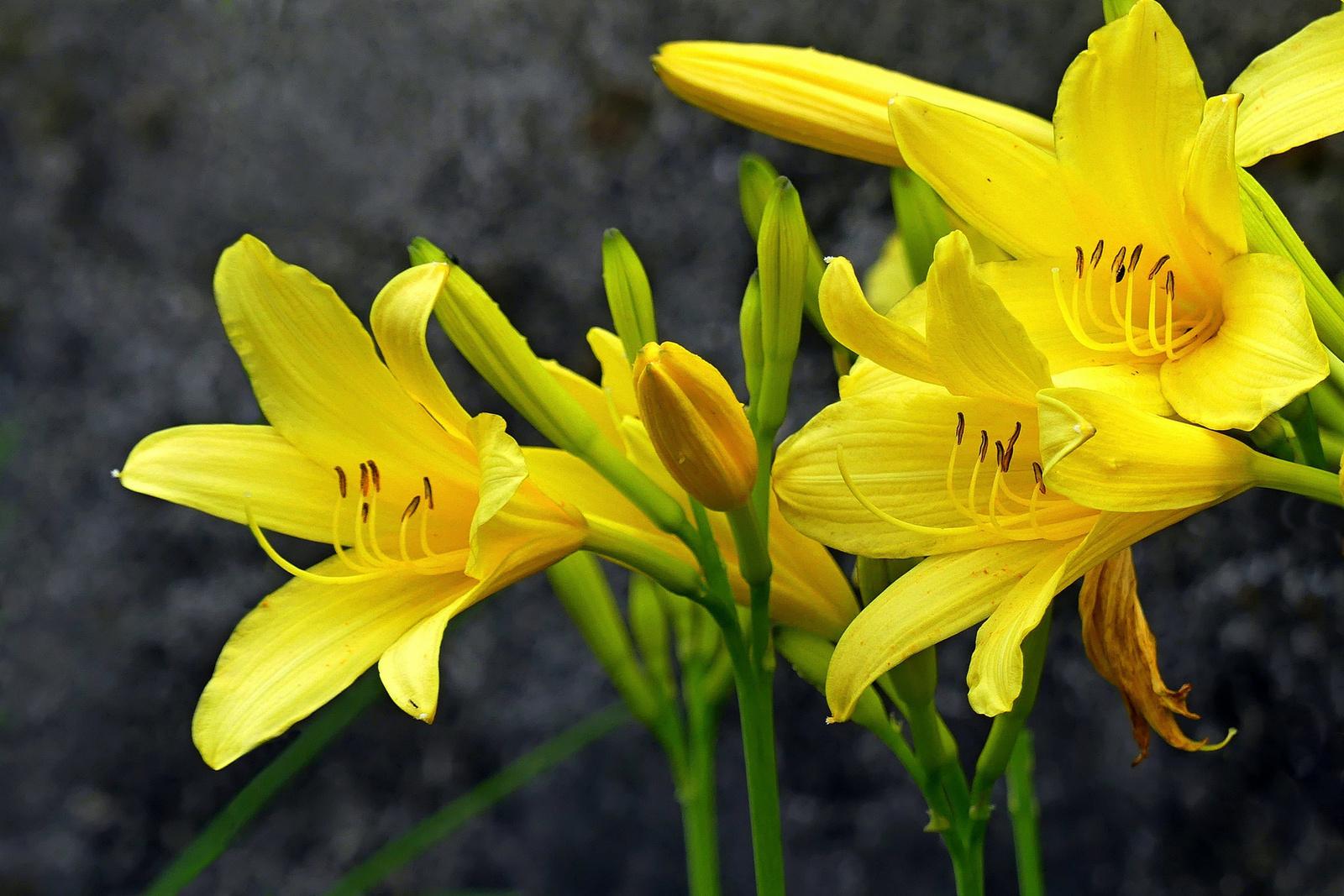 15 Lakótelepi virágok
