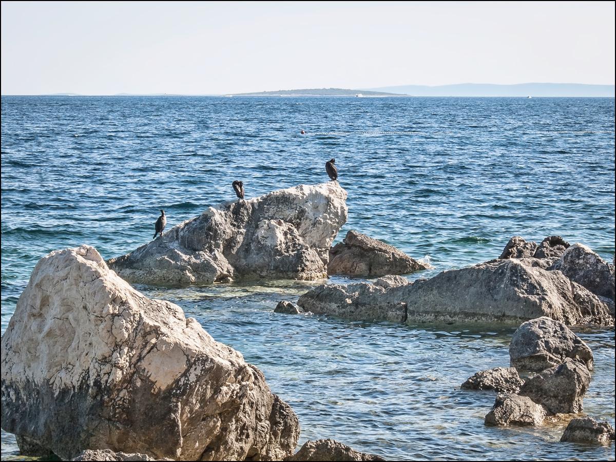 Tengeri látkép kormoránokkal