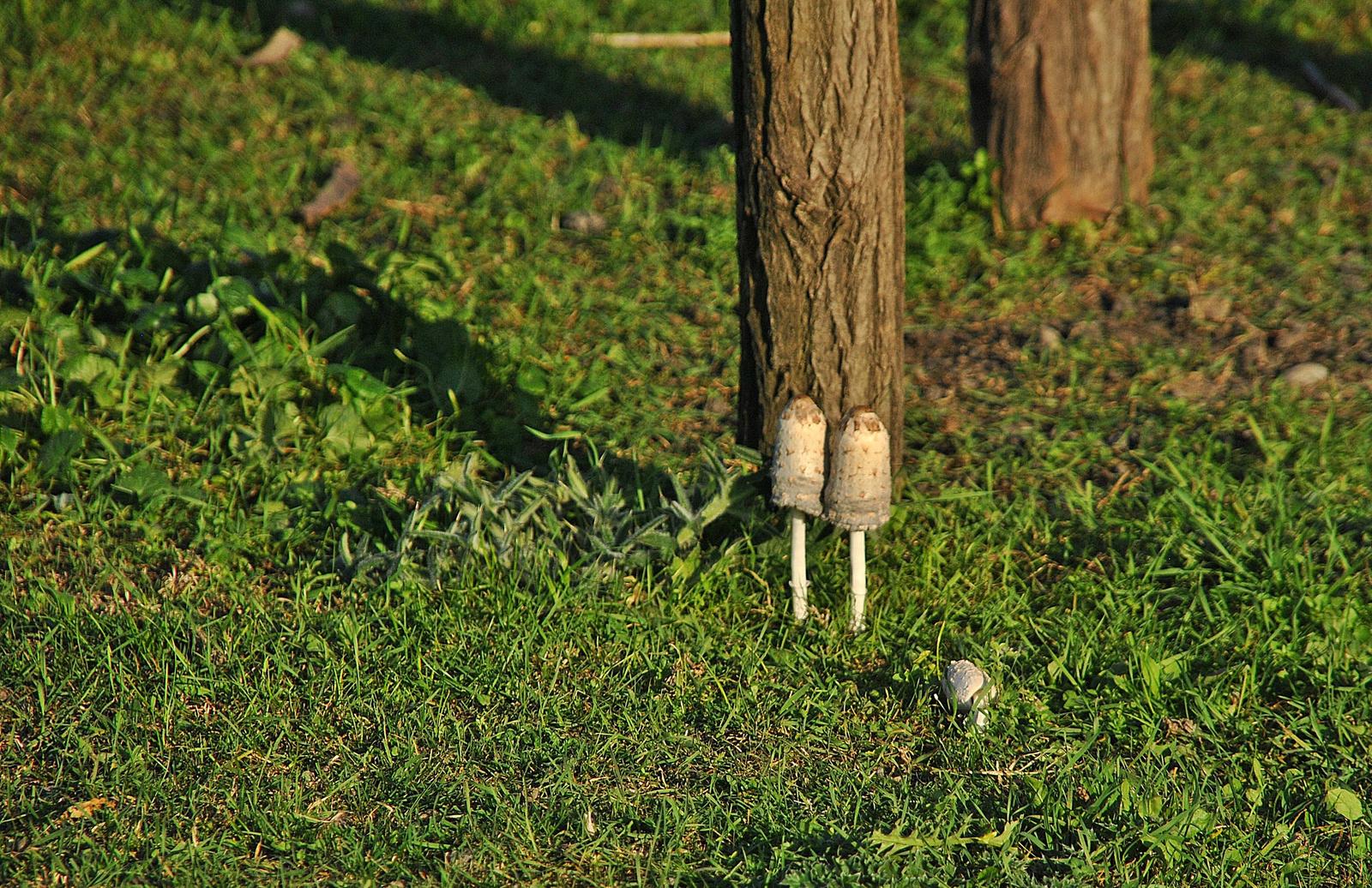 A gombák nem nőnek az égig.