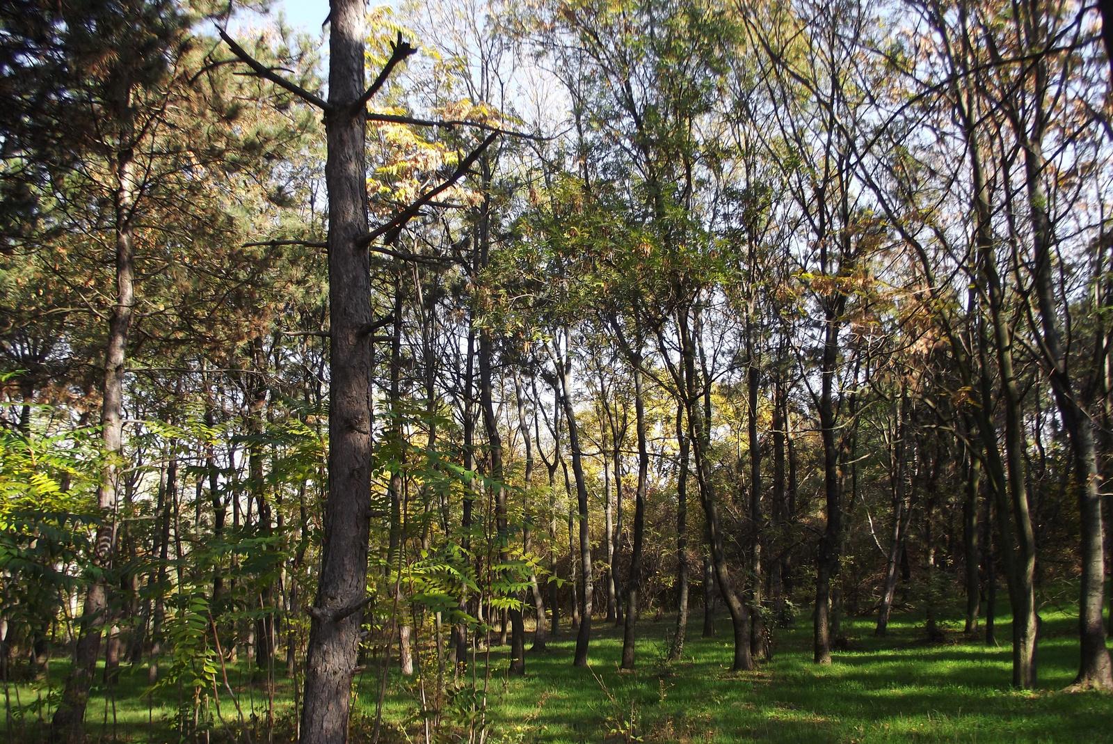 Napfény járja át az erdőt