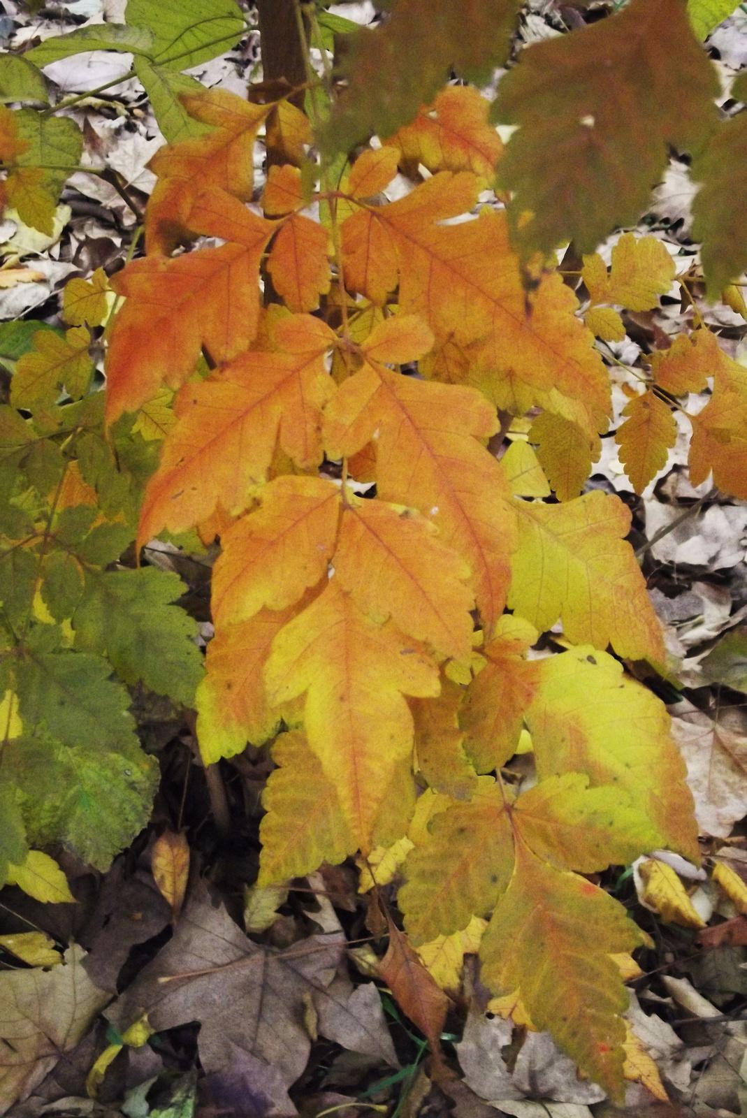 Őszi levelek 12.