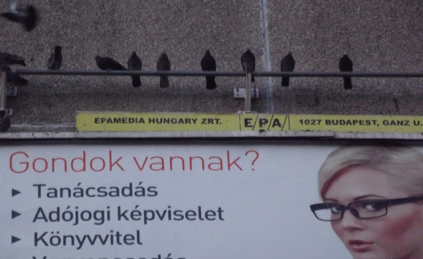 Reklám-galambok