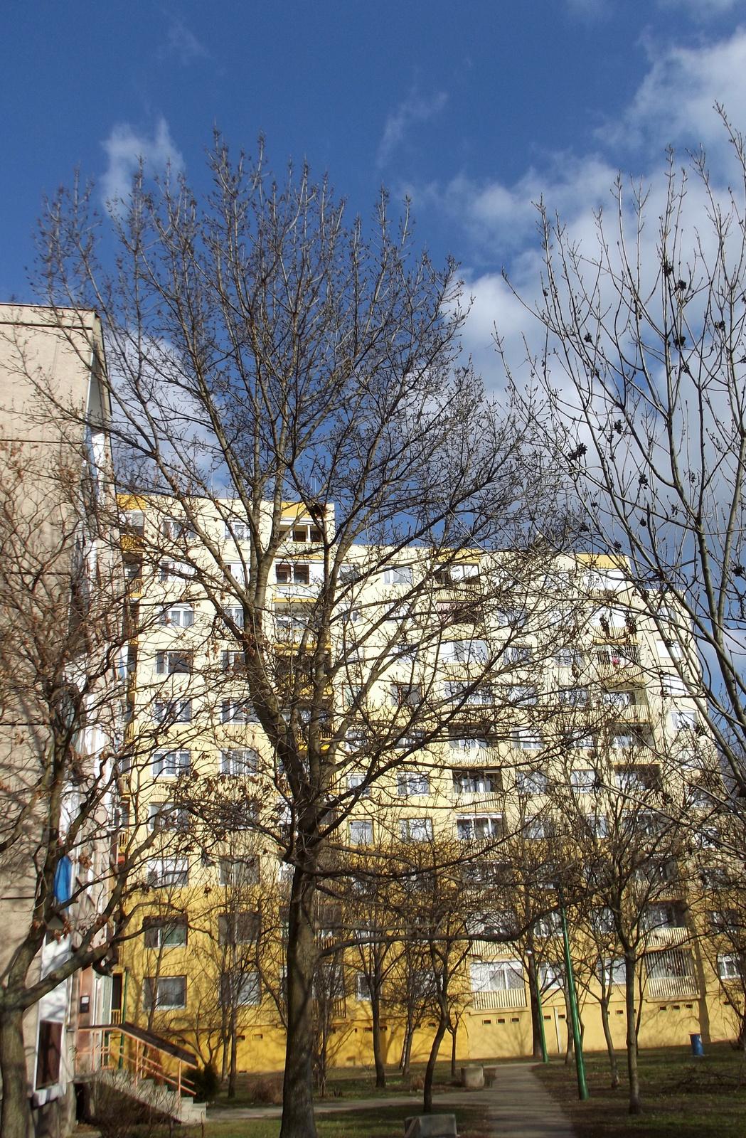 Fák-házak-felhők 1.