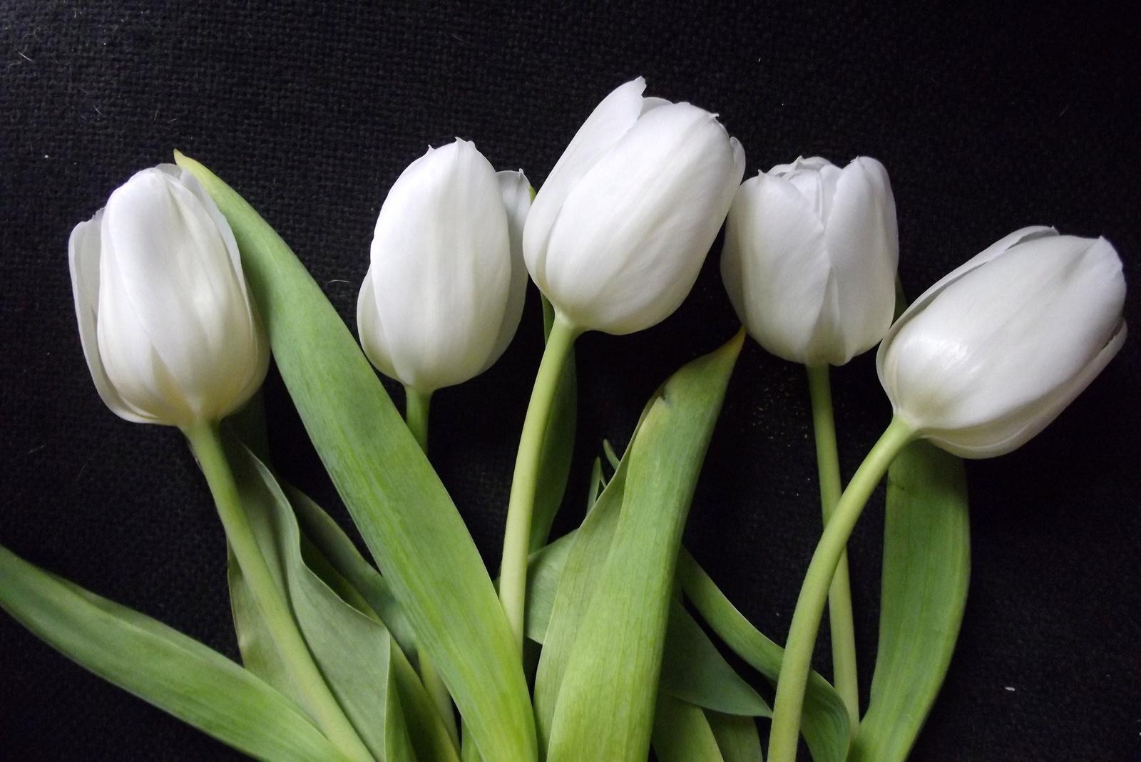 Nőnapi tulipánok