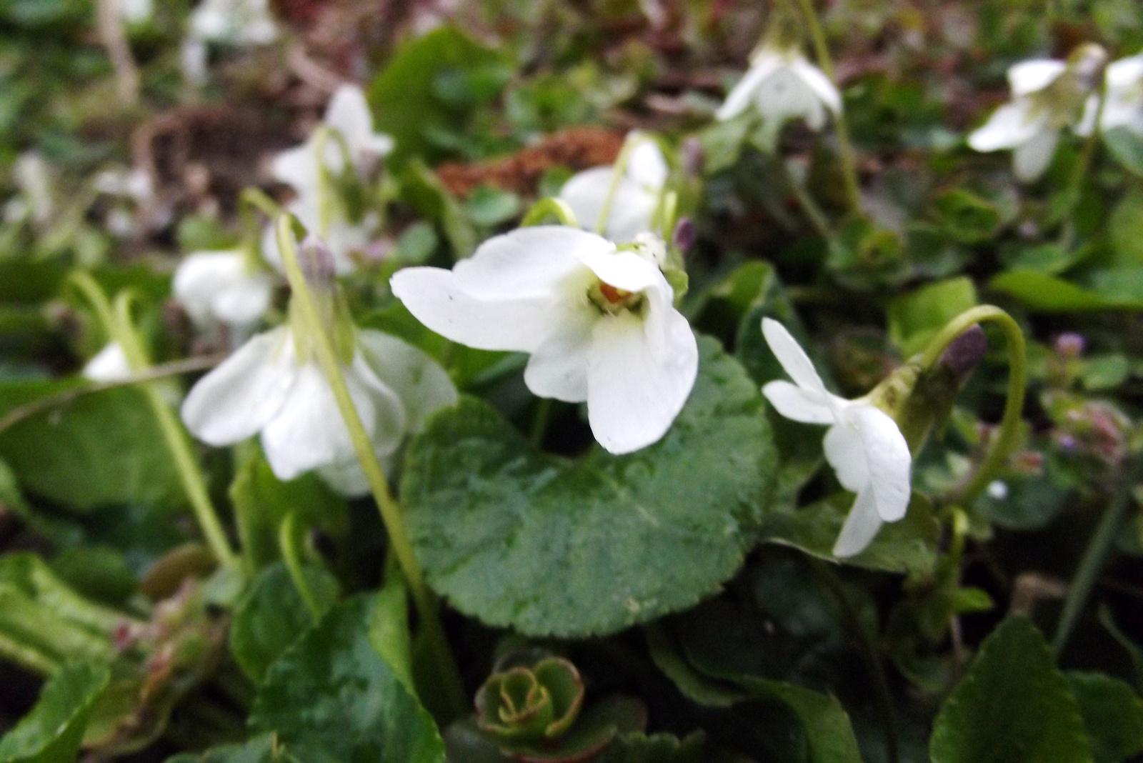 Tavaszi apróságok (8)