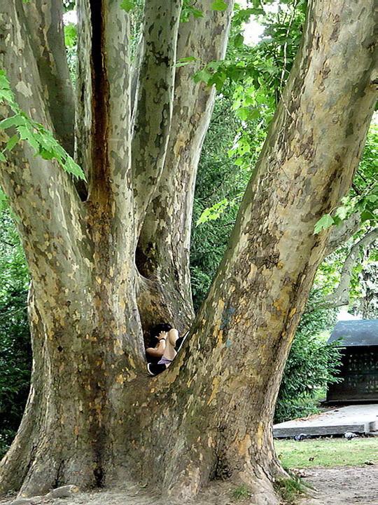 A fa védelmében ...