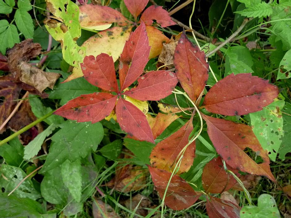 Ez is ősz ...