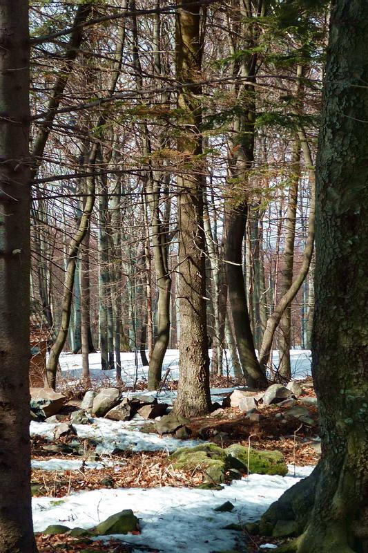 Erdőben ...