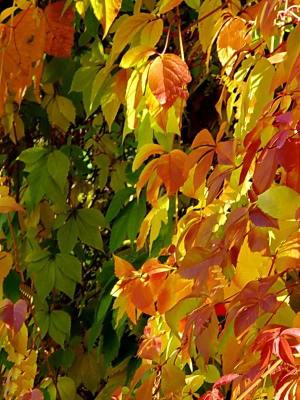 Ősz színei