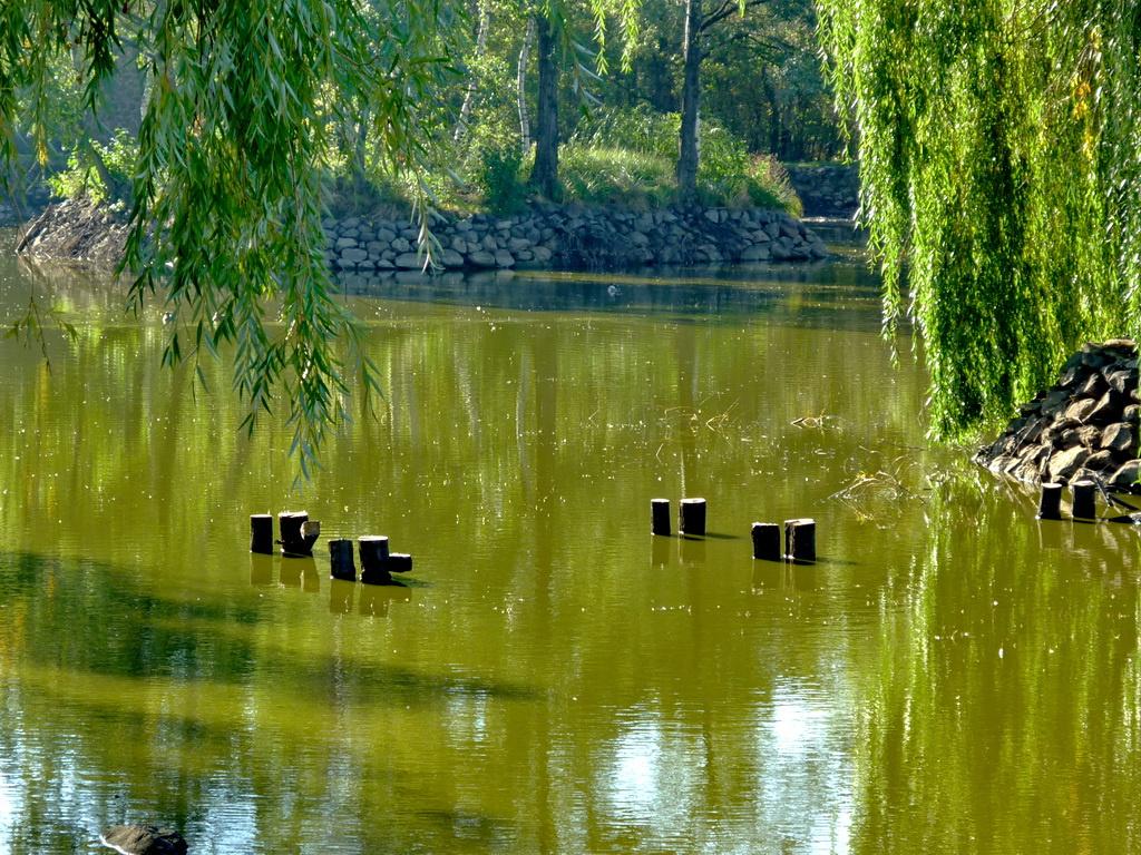 Víz, part, fák