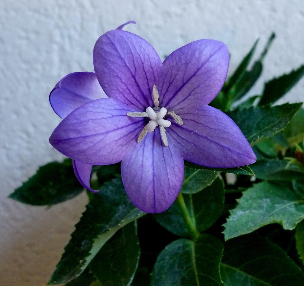 Lufi virág 2.