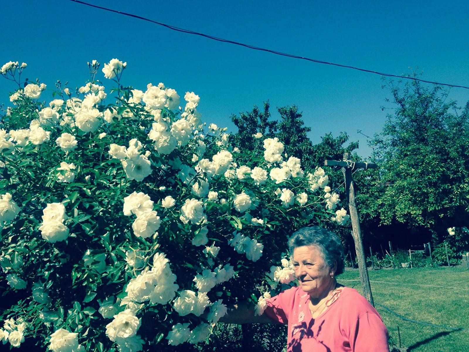 Mama és a rózsái.