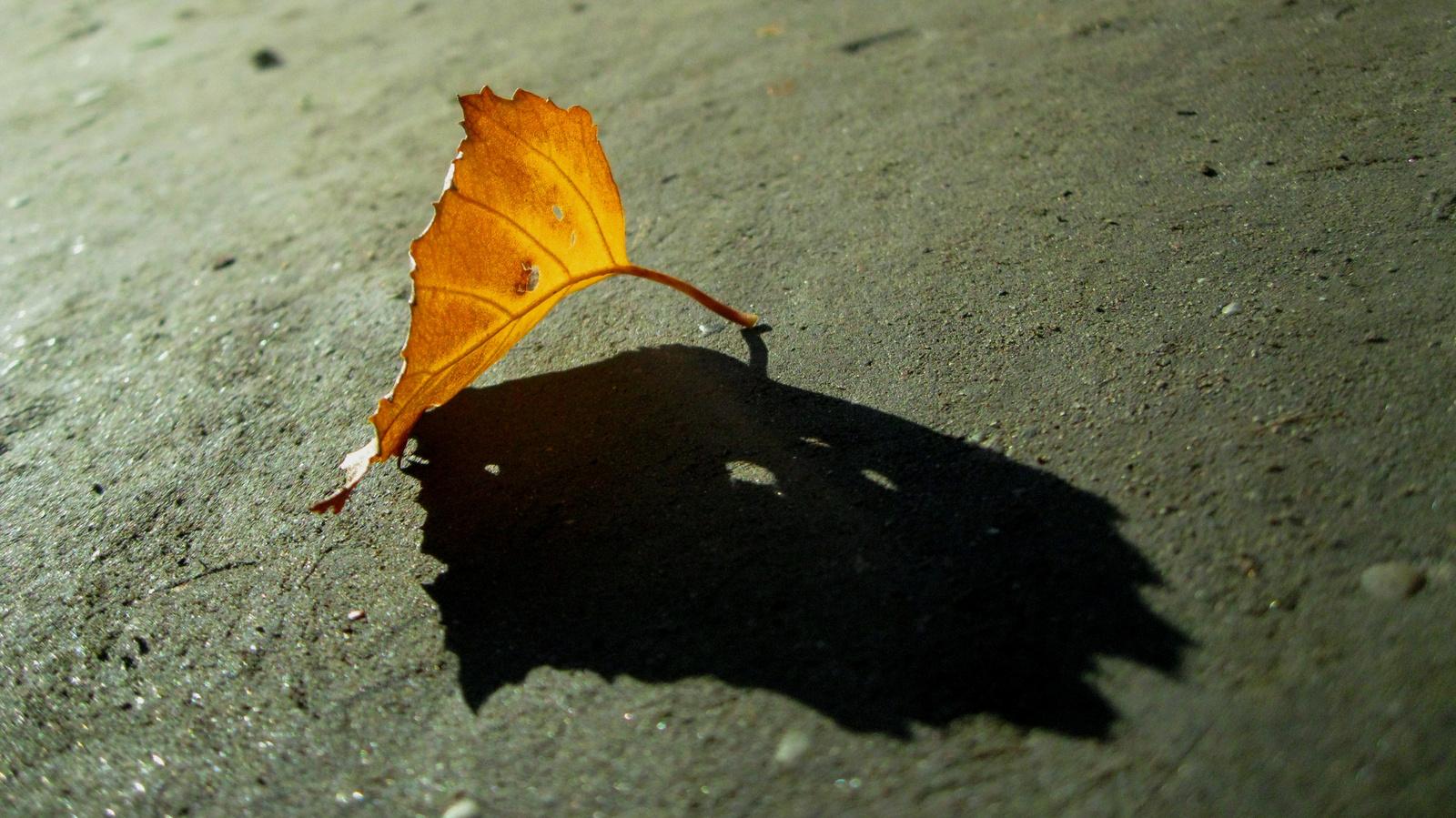Lyukas őszi levél árnyékkal