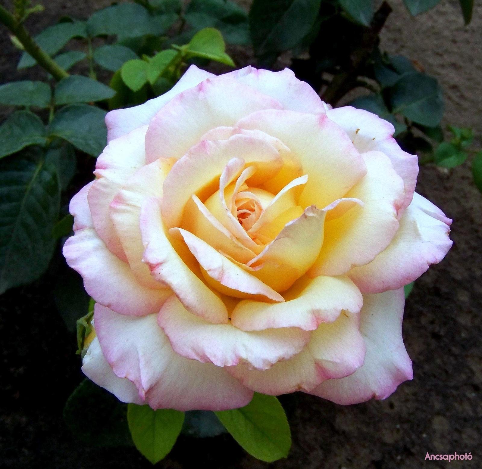 Rózsika jól érzi magát